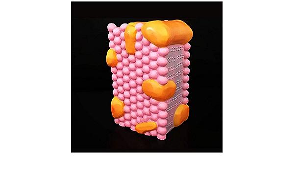FXQ Modelo de la Membrana Celular - Móvil Estructura de la ...
