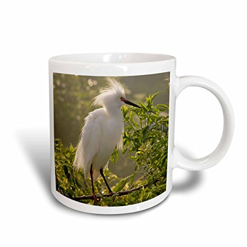 3dRose Danita Delimont - Birds - Snowy Egret bird, Alligator Farm, St. Augustine, FL - US10 MPR0261 - Maresa Pryor - 15oz Mug - Fl Augustine Outlets St