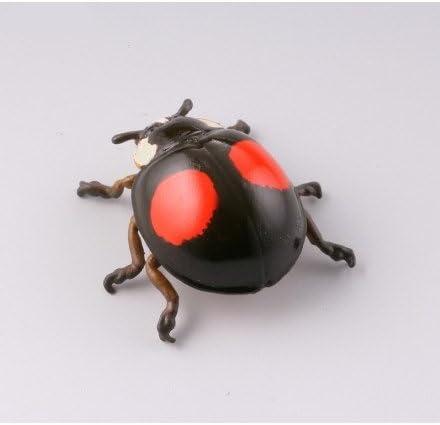 カプセルQミュージアム 実践!ひっつき虫図鑑 部屋の壁の昆虫王国 [1.ナミテントウ(2紋型)](単品)
