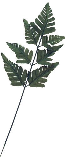 24 Artificial Silk Green Fern Leaf Picks for Floral Arranging, Crafting and ()