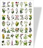 COMMON WILD FLOWERS Poster - 49 European Wild Flower Images
