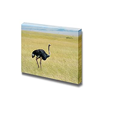 Canvas Prints Wall Art - Ostrich Walking on Plain | Modern Wall Decor/Home Decoration Stretched Gallery Canvas Wrap Giclee Print. Ready to Hang - 32