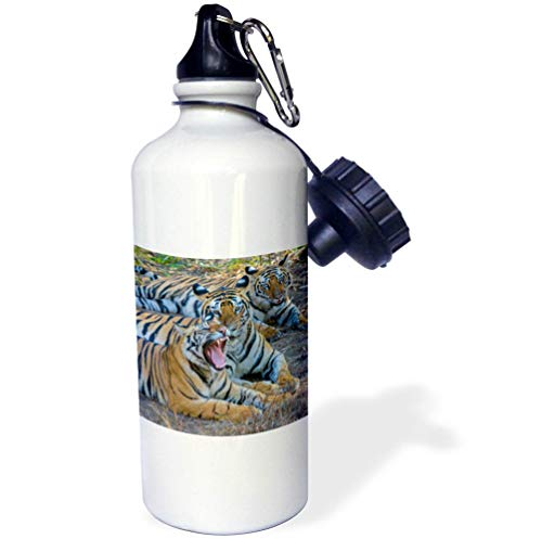 - 3dRose Danita Delimont - Tigers - Bengal Tigers, Bandhavgarh National Park, India - Flip Straw 21oz Water Bottle (wb_312704_2)