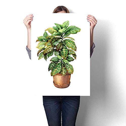 (Anshesix Wall Art Canvas Prints Croton in Clay Flowerpot Print Paintings for Home Wall Office Decor 16