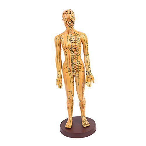 Jili Online 1pc 20'' Male/ Female Human Body Acupuncture Model - Pressure Point and Meridians - Female 2