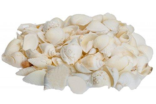 NaDeco® Muschelmix weiß 1kg | weiße Muscheln | Bastelmuscheln | Dekomuscheln | Deko Schnecken | maritime Dekoration
