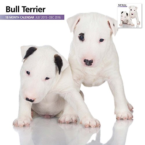 Bull Terrier 18 Month 2016 Wall Calendar