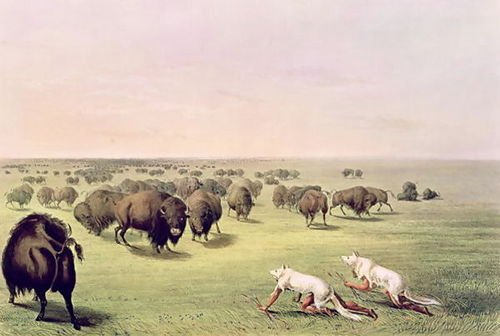 George Catlin Hunting Buffalo Camouflaged with Wolf Skins, c.1832 107x72