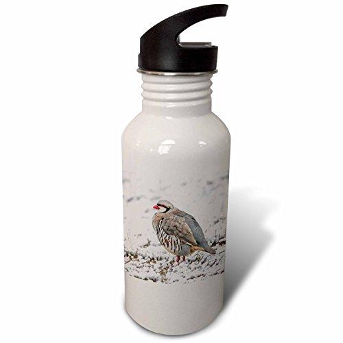 Antelope Stand - 3dRose Danita Delimont - Birds - Utah, Antelope Island State Park, Chukar stands in the snow. - Flip Straw 21oz Water Bottle (wb_260205_2)