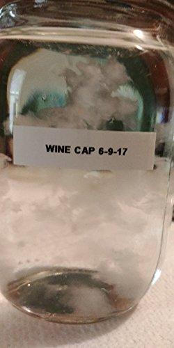 wine cap mushroom - 5