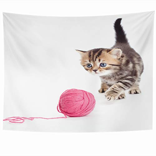 Ahawoso Tapestry 60x50 Inches Nautical White Cat Tabby British Kitten Playing Red Clew Ball Pet Cute Funny Baby Adorable Wall Hanging Home Decor Tapestries for Living Room Bedroom Dorm