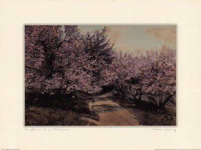 Disappearing Blossom by Wallace Nutting - 24x18 Inches - Art Print Poster