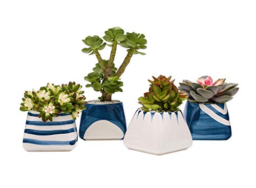 TOUCH MISS Ceramic Succulent Planter Pot with a Hole,Pack of 4,5.5x3.35x3.15 Inch White and Royal Blue Square