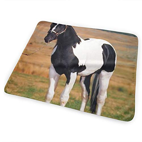 Dy27sdsmat Tobiano Point Stallion Horse Spotter Animal Portable Diaper Changing Pad - Makes Any Surface A Changing Station - Great Baby Showers - Ideal Your Infant, Newborn - Portable Spotter
