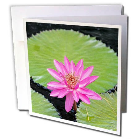 Tropical Wedding Postage (3dRose Danita Delimont - Flowers - Tropical Night Flowering Waterlily, Usa - 6 Greeting Cards with envelopes (gc_277993_1))