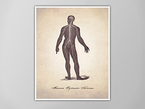 Central Nervous System Art Print, Human Anatomy Art Print, Human Anatomy Nervous System, Medical Illustration Print, Human Anatomy Prints