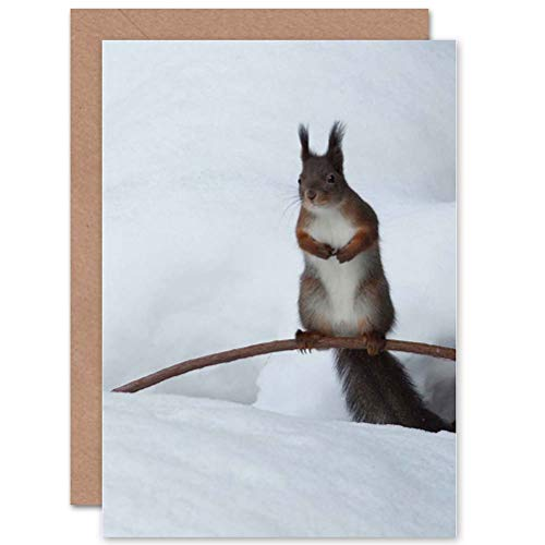 Wee Blue Coo Animal Nature Squirrel Winter Snow Furry Cool Cute Blank Greetings Card