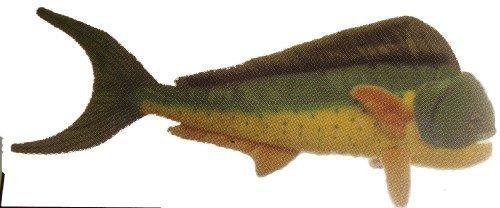 mahi mahi fish - 4