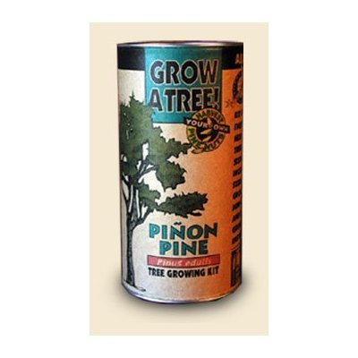 Pinion Pine Tree Growing Kit - Grow Evergreen Pinion Pines Trees from Seed To Saplings - Kit Includes Seeds, Instructions, More.