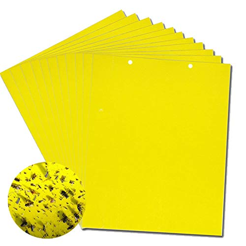 Eight Insect Control - REKSIN STAR 20 Pack Yellow Insect Sticky Trap, Dual Sided Adhesive Trap for Plant, Garden from Fungus Gnats, Whitefly, Aphid, Leaf Miner, Flying Insects, Bugs (8x6 Inches, Twist Ties Included)