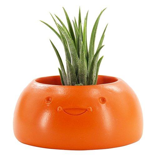 Box Jewel Window (Windowsill Planter Box - Smiling Planter for Cactus Succulent,Planter Holder,Round,Christmas Decor Gifts)