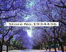 Schlussverkauf! schnell wachsenden lila Paulownia Samen 100PC, schnell - wachsende Pflanze Bäume Baumsamen für Heimtextilien