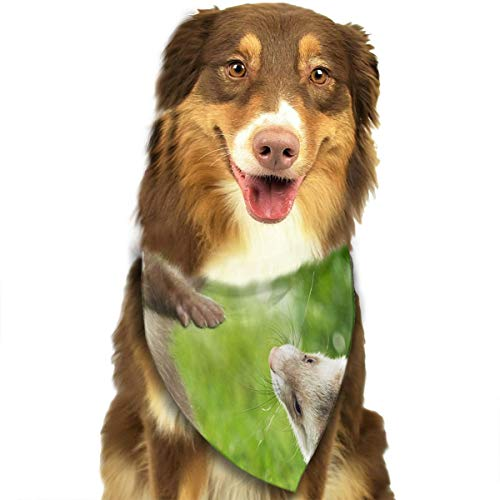lightly Pet Deltoidal Scarf Ferrets Hurones Animal Grass for Dog Bandana Hot Neckerchief Triangle Scarf Around Mouth