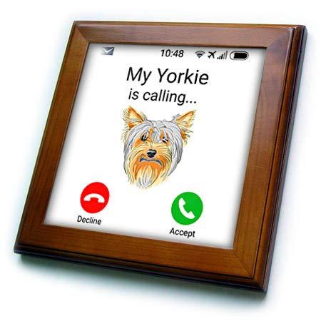3dRose Carsten Reisinger - Illustrations - My Yorkie is Calling Funny Incoming Phone Call Yorkshire Terrier - 8x8 Framed Tile (ft_318838_1)