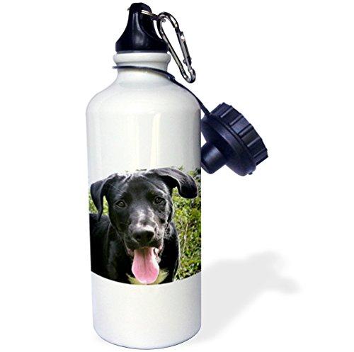 lack Labrador Puppy