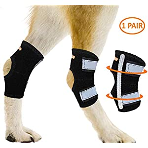 NeoAlly Dog Rear Leg Hock Brace with Metal Spring Strips Splint Support to Hind Leg and Ankle, Help with Loss of… Click on image for further info.