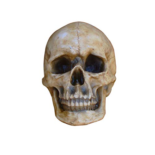Wall Charmers Life Size Faux Human Skull | Gothic Home Decor + Man Cave Decor | Humans Bathroom Decor + Bedroom Decor | Living Room Decor for Sugar Skull  Steampunk – Home Decorative Accessories by Wall Charmers