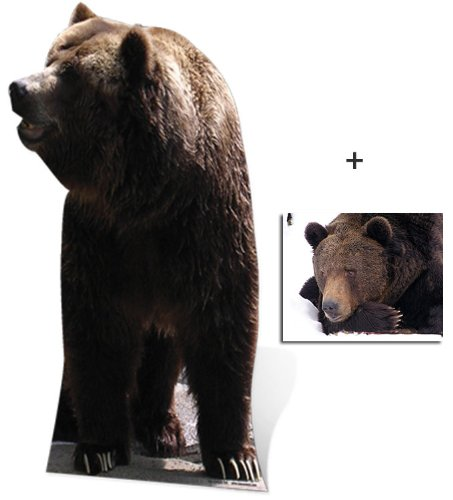 Bear - Wildlife/Animal Lifesize Cardboard Cutout / Standee / Standup - Includes 8x10 (20x25cm) Star Photo