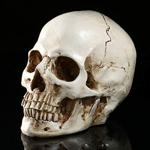 VietGT Figurines & Miniatures - Human Diamond Eyes Skull Lifesize 1:1 Resin Replica Medical Model Aquarium Ornament Halloween Party DIY Decoration Supplies 1 Pcs]()