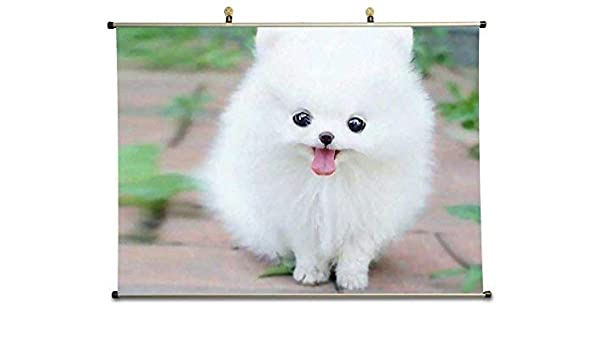 Amazon Com Tollyee Teacup Pomeranian Puppy Maxie Canvas Wall Scroll Poster 32x24 Inches Posters Prints