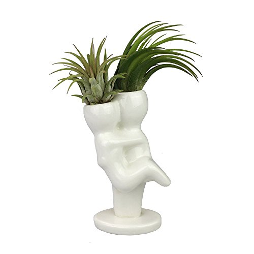 NW Wholesaler - Air Plant Little People Air Plant Holders -Mr. & Mrs. Ceramic Desktop Planters for Air Plants and Other Mini Plants