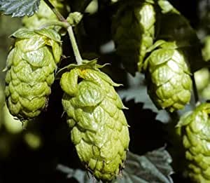 Hops Flower, Whole - Wildcrafted - Humulus lupulus (454g = One Pound) Brand: Herbies Herbs