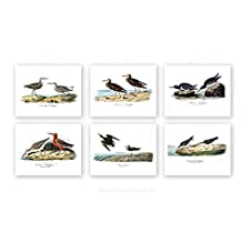 """Beach Decor Sea Birds Wall Art Set of 6 Unframed 8x10"""" Prints Beach Decor for Bathroom or Bedroom Seabirds_6A"""