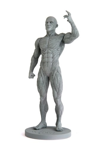 Artist\'s Anatomy Male Anatomical Model 2.0 Reference Tool by ...
