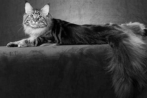 紫色のソファの壁紙に横たわっている猫-動物の壁紙-#52231 - 白黒の キャンバス ステッカー 印刷 壁紙ポスター はがせるシール式 写真 特大 絵画 壁飾り50cmx33cm