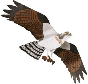 Osprey Kite – Assembled B001O2IY1K
