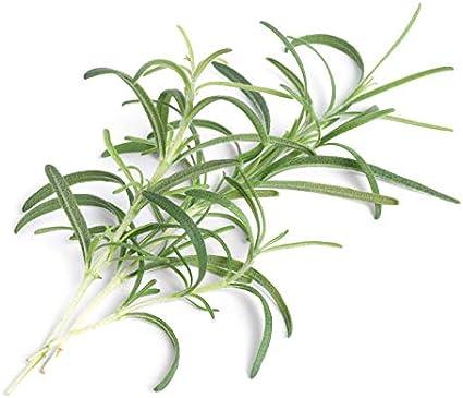 KingSaid 40m DIY Bew/ässerungssystem Garten 35 Drippers Gartenpflanze Bew/ässerung Set Micro Drip