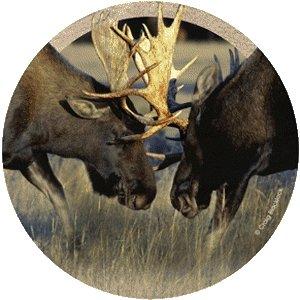 Thirstystone Drink Coaster Set, Bull Moose Fight (Moose Set Coaster)