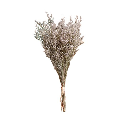 Dried Wildflower - ReFaXi Dry Flowers Bouquet Floral Craft Supply Wildflowers Vase Filler Home Decorations (Green)