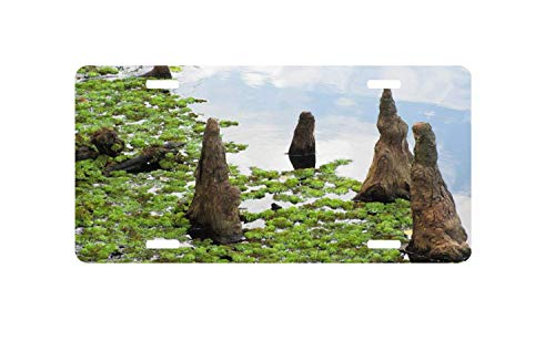Davis Relev Personalized Cypress Knees License Plate Car Tag 4 Holes Auto License Plate Frame