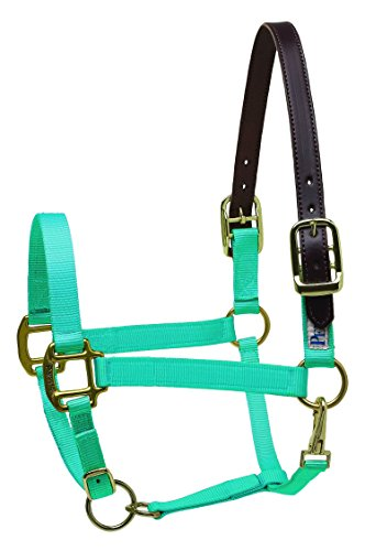 Perri's Leather Cob Safety Halter, Turquoise