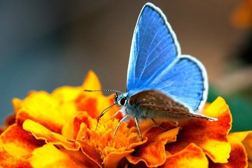 Blue Butterfly and Yellow Flower Art Print on Canvas,Wall De