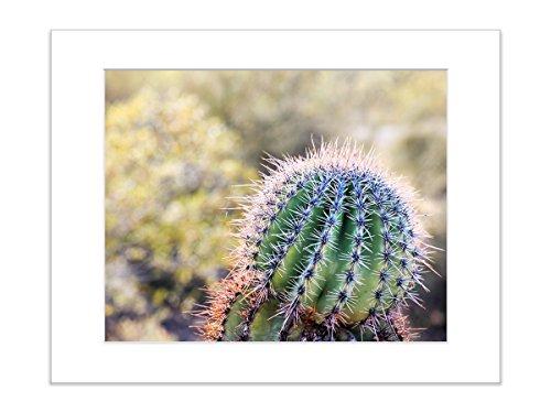Green Desert Cactus Botanical Southwestern Landscape Photo 8x10 Matted Print