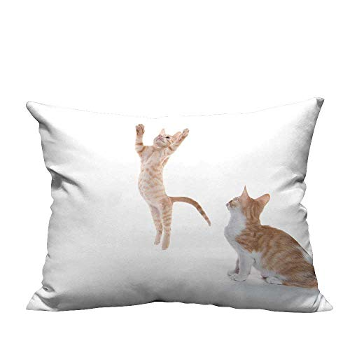 - YouXianHome Lovely Cushion Covers one Yellow Tabby Kitten Leaps in The air While Other Look on Isolate Resists Stains(Double-Sided Printing) 20x35.5 inch