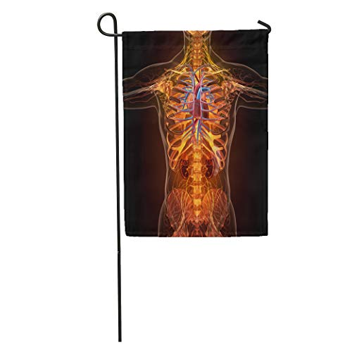 (Semtomn Garden Flag Blue Anatomy of Human Organs in X Ray View Red Home Yard House Decor Barnner Outdoor Stand 12x18 Inches Flag)