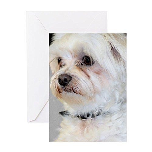 (CafePress - Maltese - Greeting Card, Note Card, Birthday Card, Blank Inside Glossy)